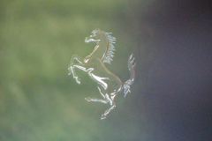 En hest der er dyr, og dyr i drift