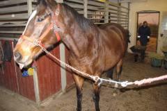 Mannes hest ved Barsebáck, 03.12.2011