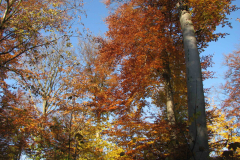 Kærhave Skov i sine flotteste farver, 31.10.2007