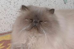 Stoffe, Bo´s elskede kat