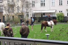 Til hest i have Norsvej, Anna, 16.04.2011