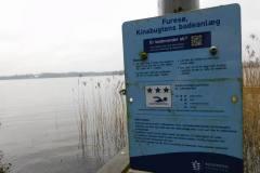 Furesøen, hér så vi Vandstær, 15.02.2020