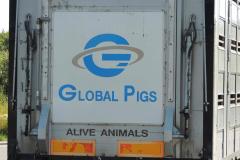 Jooo, men hvad siger grisene?, 09.07.2013