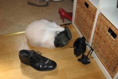 Det er altså min sko - det er!
