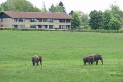 Elefantluftning i Ballerup, 11.05.2007