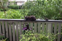 Mathilde på terrasekant på Frbr., 07.06.2015