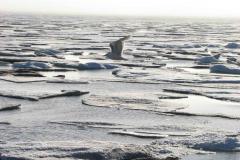 776.  Nordøst Grønland, 02.07.2008