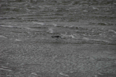 734.  Vadehavet, 18.09.2007