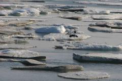 778.  Nordøst Grønland, 02.07.2008