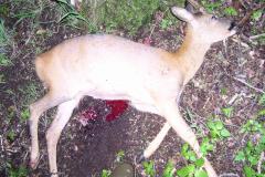 CNS- kugle, død i knaldet, 01.06.2006
