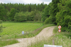 Fouragerende rå, 18.06.2009