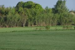 Terslev, 17.05.2012