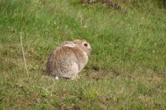 En Islandsk kanin, 08.06.2003