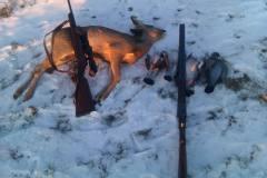 Jack, 4 duer og et rålam i Terslev, 31.01.2012