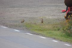 Kaniner i Sverige, 01.08.2015