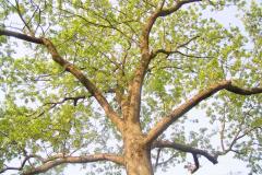 Livets træ på Kærhave, 28.05.2005