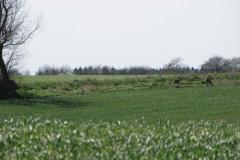 2 bastbukke fredeligt i Terslev, 31.05.12 - 3 uger senere sloges de