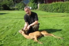 Buk nr. 2, 21 kg brækket, seksender i Sverige, 18.08.2012