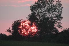 Terslev, 10.06.2013