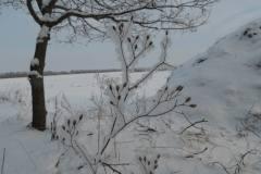 Sorø, mårhund, 16.01.2013