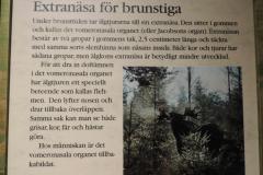 Elgens (og andre hjorte) lugtesans er bedst med åben mund