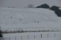 Del af et større spring Salby, 24.03.2008