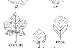 1_3.-Træers-blade
